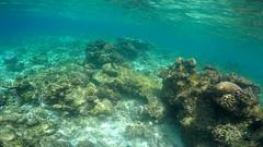 POV underwater view of a scenic coral reef and fish, slow motion. Stock Footage