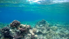 POV underwater view of a scenic coral reef and fish. Stock Footage