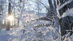 Sunset in winter forest. Sun rays shine through winter trees. Fr Stock Footage