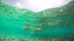 A man and woman couple snorkeling over a coral reef of a tropical island Stock Footage