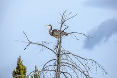 Heron standing on tree branch Stock Photos
