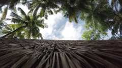Many palm trees and a palm roof Stock Footage