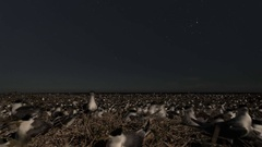 Colony of sea birds at night with stars Stock Footage