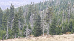 Tract of dead trees. Co2 and So2 emission. Acid rains. Air pollution Stock Footage