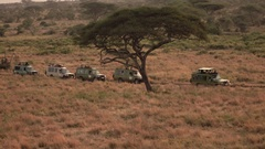 AERIAL: Safari jeeps standing in line in misty African wilderness at sunrise Stock Footage