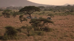 AERIAL: Safari jeeps standing in line in misty African wilderness at dawn Stock Footage