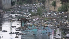 A stray dog searches food in a heavily polluted stream in Bangalore, India Stock Footage