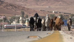 Female herder with flock of goats on road in Middle East (Jordan) Stock Footage