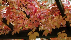 Hanging Gardens in Autumn Park Stock Footage