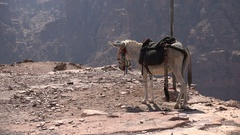Lonely donkey on mountain cliff in deserts in Southern Jordan (Middle East) Stock Footage