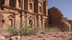 Monastery building behind yellow flowers in historic archaeological city Petra Stock Footage
