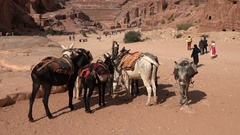Donkeys wait for tourists in ancient city Petra in Jordan Arkistovideo