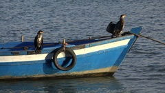 Cormorants dry in the sun and wind on wooden fishing boat Rabat, Morocco Stock Footage