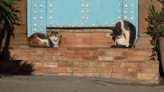 Two cats laze in the sun at entrance of traditional house in Rabat, Morocco Stock Footage