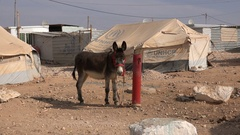 Donkey in front of UNCHR agency in Syrian refugee camp Jordan Stock Footage