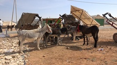 Donkey 'parking lot' inside the Zaatari refugee camp in Syria Stock Footage