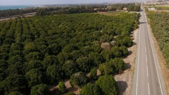 The orange plantation with green trees and two roads from both sides Stock Footage