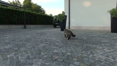 A cat runs away from the drone. Aerial video. About animals, cats, escape Stock Footage