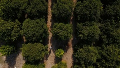 The people walking amoth the trees on the orange plantation Stock Footage