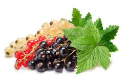 Clusters (bunches) of red,white and black currants together Stock Photos