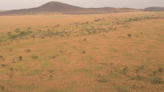 AERIAL: Spectacular African plain savannah landscape at golden light morning Stock Footage