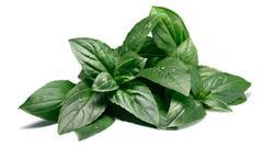 Fresh fragrant Thai Basil, paths Stock Photos