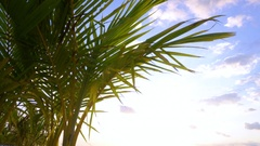 Palm Tree Close Up Stock Footage