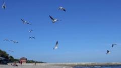Seagulls fly overhead in clear blue sky on beach Stock Footage