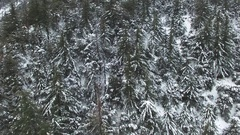 Pull Back from Snow Covered Tree In The Mountains 01 Stock Footage