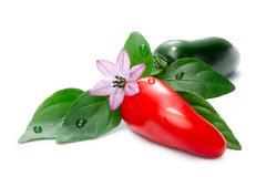 Hot Laminada Peppers (Capsicum Annuum) Stock Photos