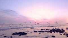 Flock of birds fly above ocean waves at sunset 01 Stock Footage