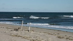 Beach waves with driftwood sticking out of beach Stock Footage