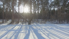 Winter forest, the Sun through the trees D-Log Flat Video For Editing Stock Footage