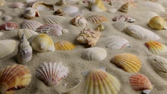 Approximation of seashells lying on the sand Stock Footage