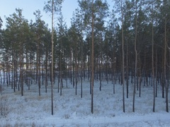 Winter forest, sunny day. D-Log Flat Video For Editing Stock Footage
