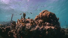 Dead coral in caribbean  Stock Footage
