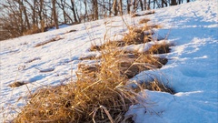 Withered grass in snow on the hill Stock Footage