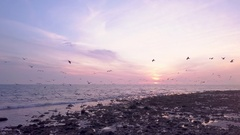 Flock of birds fly above ocean waves at sunset 04 Stock Footage