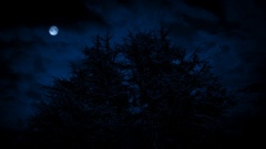 Scary Trees Under Moon On Stormy Night Stock Footage