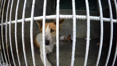 Abandoned Dogs in Animal Shelter Stock Footage