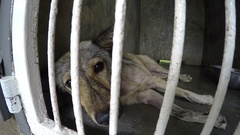 Dog with Sad Eyes in Shelter Stock Footage