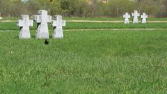 Crosses at German military memorial cemetery Stock Footage