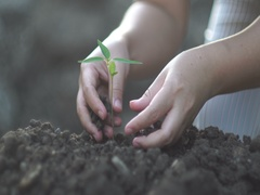 Young woman planting a tree in the garden. Ecology concept Stock Footage