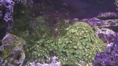 Marine aquarium corals reef stock footage video Stock Footage