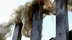 Sheep wool on the fence Stock Footage
