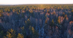 Winter forest, with a bird's-eye view over the trees. Drone shot. 4k footage. Stock Footage