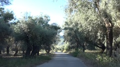 4K Olive Tree Orchard Driving Car View, Oil Farm, Harvest in Greece Countryside Stock Footage