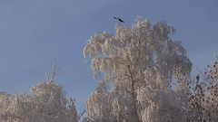 Beautiful snowy trees Stock Footage