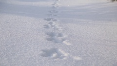 Hare tracks in the snow Stock Footage