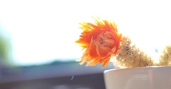 Close up of the orange flower of a cactus Stock Footage